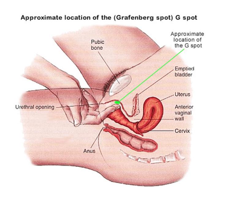 Достич оргазм спомощи точки g